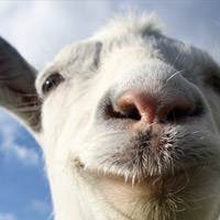 goat_simulator[1]